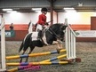 All Rounder horse - 12 yrs 12.3 hh Coloured - Lincolnshire