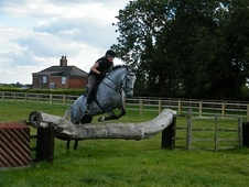 All Rounder horse - 5 yrs 16.0 hh Dapple Grey - Lincolnshire