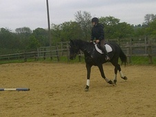 Potential young sports horses horse - 7 yrs 16.2 hh Brown - Essex
