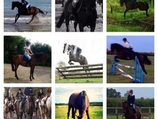 Small 16. 2 Riding Club/ Pony Club All Rounder Honest Gentleman