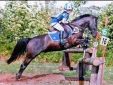 All Rounder horse - 14 yrs 13.1 hh Black - Lincolnshire