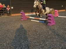 13. 2hh pony for sale REDUCED as new pony arriving