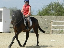 All Rounder horse - 11 yrs 2 mths 15.3 hh Bay - Bedfordshire