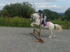 11. 2hh Pony For Sale.