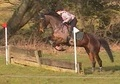 Show Jumpers horse - 8 yrs 15.3 hh Bay - Derbyshire