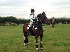 Fantastic All Rounder - 15. 2, 5 Year Old Mare