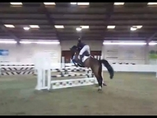 For sale show jumper