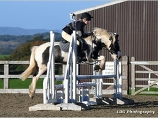 Keen Jumping/Driving Pony