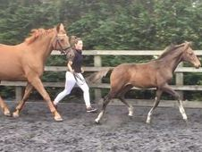All Rounder horse - 2016. 0 hh Bay - Cambridgeshire