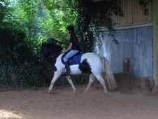 sharer wanted for 14. 2hh mare