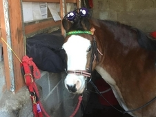 Horses and ponies for loan share