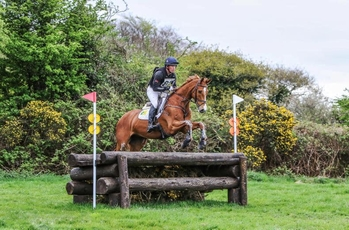 All Rounder - Gelding - 7.1 hh - Oxfordshire