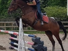 16. 3 thoroughbred for part loan