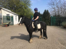Lightweight - For Adoption - Mare - 13 hh