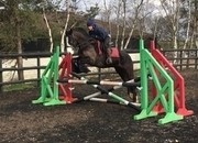 6 year-old - Irish Sports Cob - Cobs - 15.2 hh - Norfolk