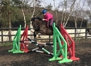 5 year-old - Irish Sports Cob - Cobs - Mare - 16 hh - Norfolk