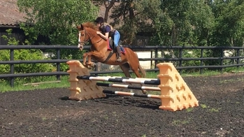All Rounder - 15.2 hh - Norfolk