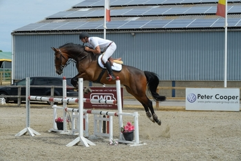 10 year-old - All Rounder - Gelding - 16 hh - Oxfordshire