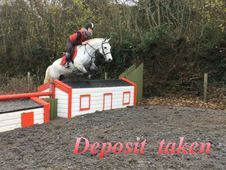 All Rounder horse - 14. 2 hh - Laois