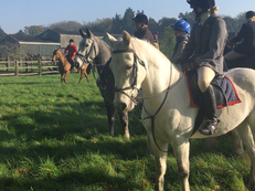 Connemara - All Rounder - 15 hh - Norfolk