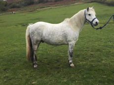 Part - For Adoption - 12 hh