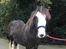 Lightweight - For Adoption - 12 hh - South East Yorkshire