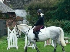 Irish sports horse for sale *Fiona's pride* (lilly)