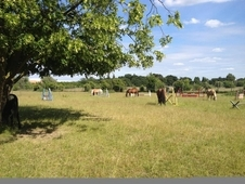Grazing Livery Bedfont/Hounslow Border 4 spaces ava. 1 Oct