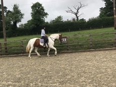 Full livery for horses and ponies, schooling, rehabilitation, youngster and pre breaking handling.