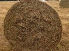 Hay Large Bails Only  Free