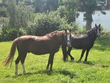Private full /retirement Livery offered for older horses (10 year...