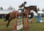 FIRST CLASS DRESSAGE HORSE & STRONG CONTENDER FOR BE100 GRASSROOTS for sale