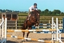 Eventers for sale