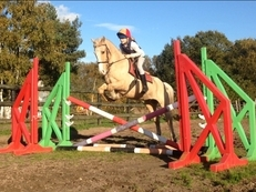 9 year-old - All Rounder - 13.2 hh - Norfolk