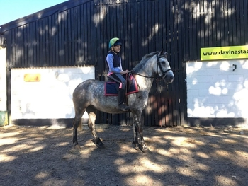Connemara - All Rounder - 13.3 hh - Norfolk