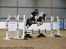 10 year-old - Irish Sports Cob - Cobs - 15 hh - Norfolk