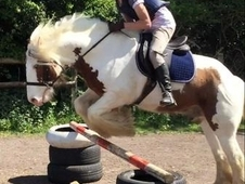 14. 2 traditional cob for full loan (to stay at current yard)