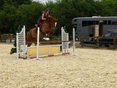 5 year-old - All Rounder - Gelding - 16.5 hh - Oxfordshire