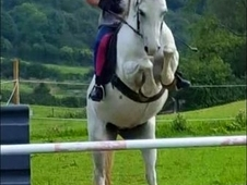 Beautiful 12hh section A mare for sale