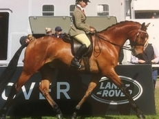 6 year-old - All Rounder - Gelding - 16.1 hh - Oxfordshire