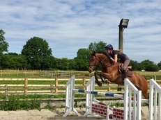 7 year-old - All Rounder - Gelding - 16 hh - Oxfordshire
