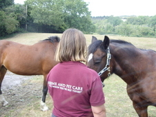 "Horse Care – ""I care when you are not there! """