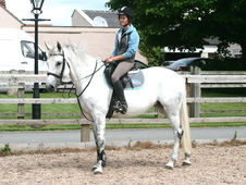 10 year-old - Warmblood - All Rounder - Mare - 16.2 hh - West Yorkshire
