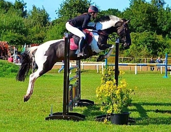 16.2-17.2hh COMPETITION HORSE WANTED FOR LOVING KNOWLEDGEABLE HOME.