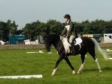 Stunning competition horse for loan