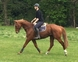 CLEVER, TALENTED EVENTER for sale in United Kingdom