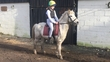 All Rounder - 11.2 hh - Norfolk