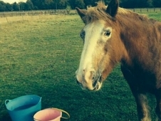 Wanted: Grazing land to rent for my horse - Eastbourne