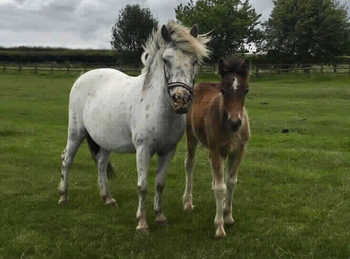 Pony - For Adoption - 12.2 hh - South East Yorkshire