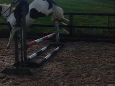 striking cob for sale make an all rounder